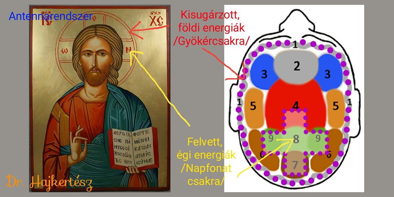 Hajgyógyászat Pekár Szilágyi Csaba